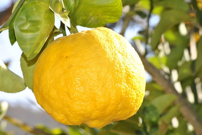 lemon-181650_640